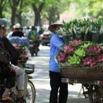 Hoa Sen o Hanoi